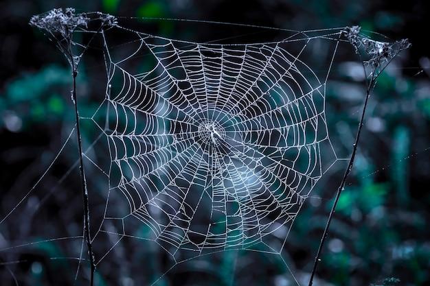 夜暗い背景の中央に白いクモの巣