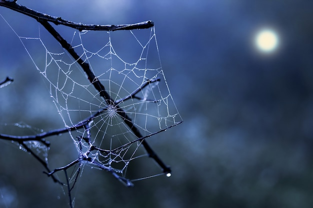 暗い夜空の背景に白いクモの巣