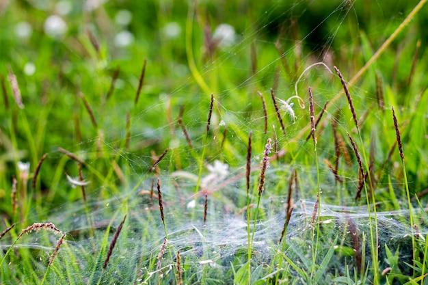 Белая сеть паука на верхней части зеленой травы на саде.