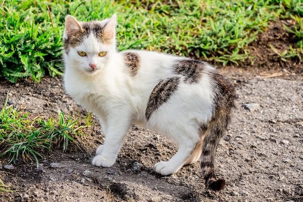 夏の緑の草の近くの白い斑点を付けられた猫