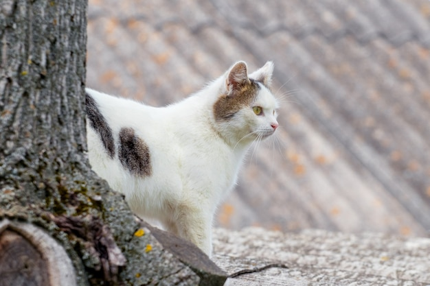White spotted cat near a tree trunk on a roof background