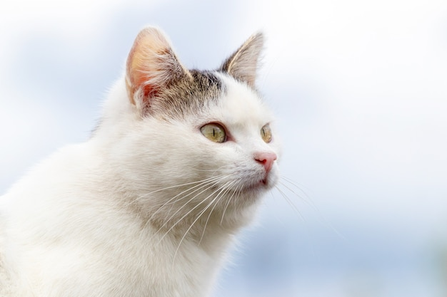 空を背景に白い斑点のある猫。プロフィールの猫の肖像画