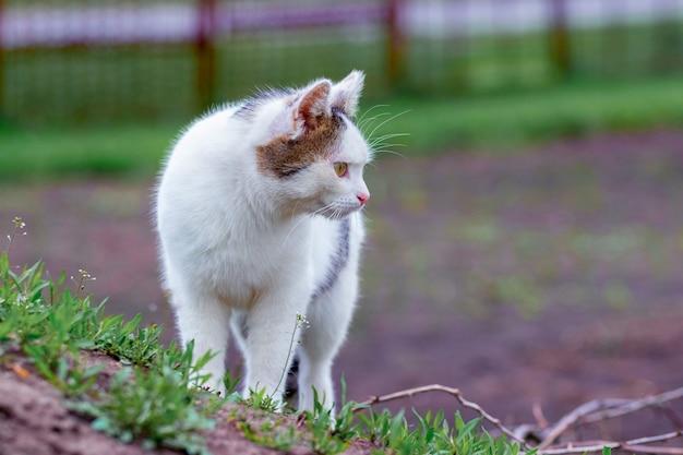 Белая пятнистая кошка на размытом фоне, кошка в саду среди зеленой травы
