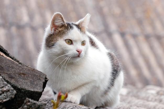 ぼやけた背景の屋根に白い斑点のある猫