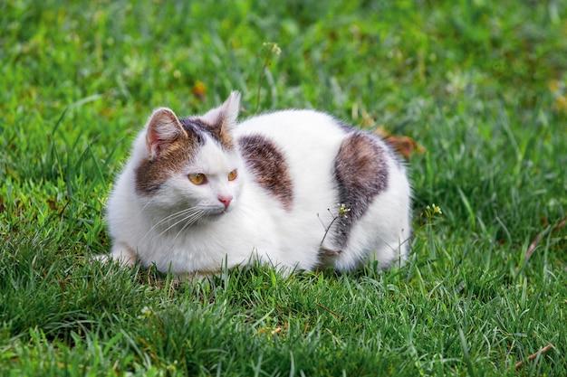 Белый пятнистый кот сидит в саду на зеленой траве