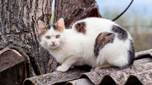 White spotted cat sitting near a tree on the roof.