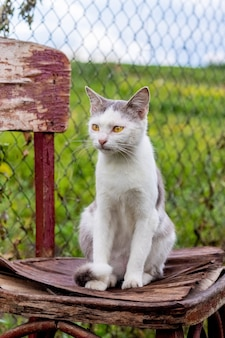 庭の古い椅子に座っている白い斑点のある猫