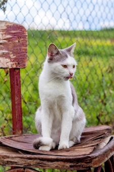 Белый пятнистый кот сидит на старом стуле в саду