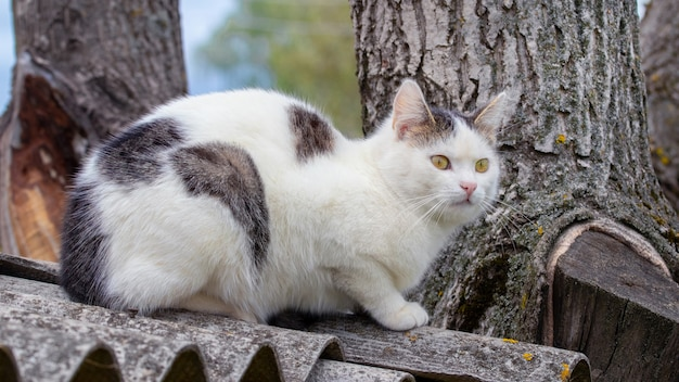 White spotted cat sitting on the roof of a house near a thick tree