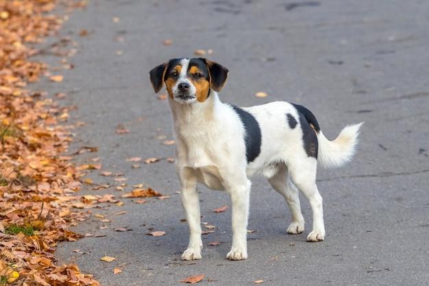 秋の散歩中に公園の路地に白い斑点のある犬