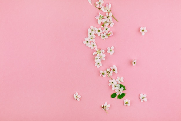 White spring cherry tree blooming flowers pattern