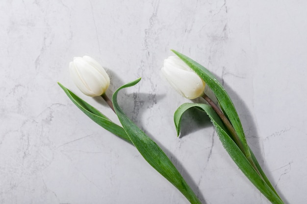 White spring flowers laying next to each other.