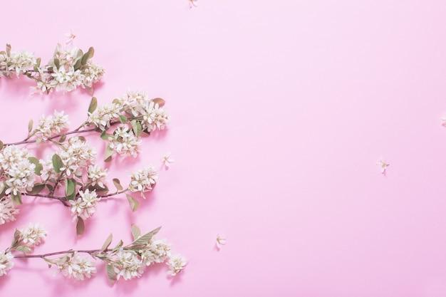 ピンクの紙の表面に白い春の花