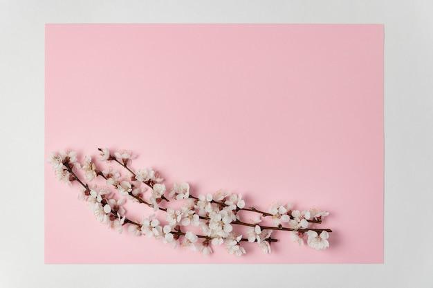 Белые весенние цветы на ветке дерева на розовом фоне. шаблон. фон. макет.