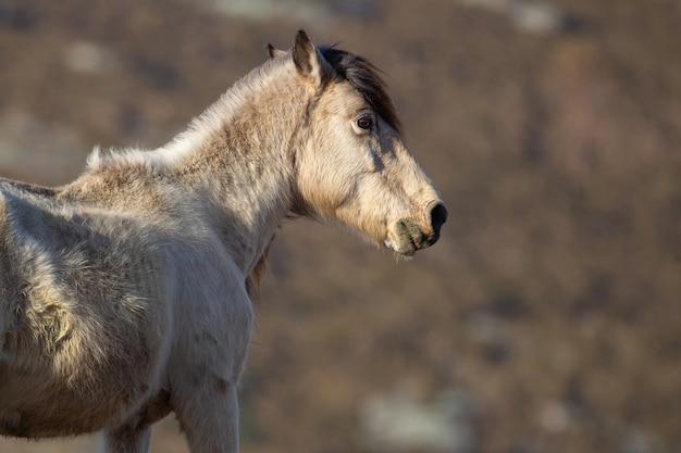 White stallion portrait