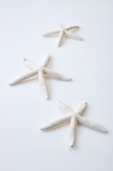 White starfish on white background