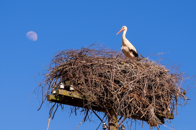 Белый аист в гнезде весной на фоне ясного голубого неба