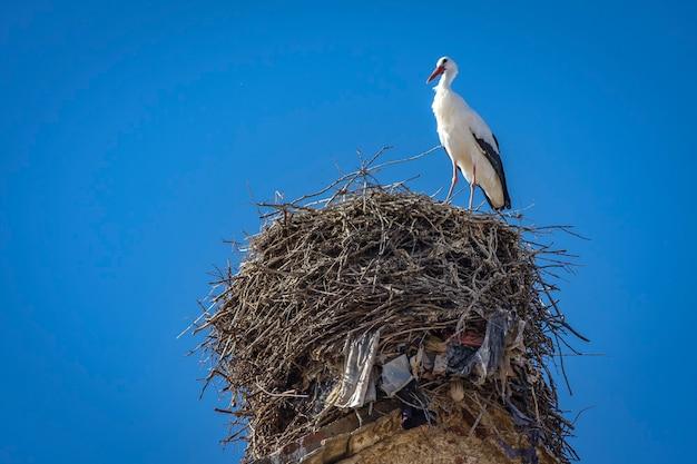 Белый аист в гнезде на вершине церкви