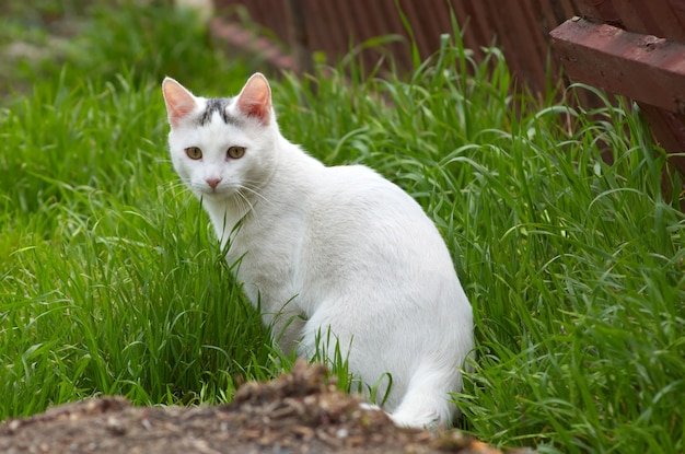 White stray cat in the grass