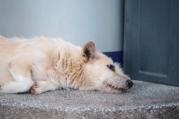 A white stray dog lying alone on the side of the street with a sad sight