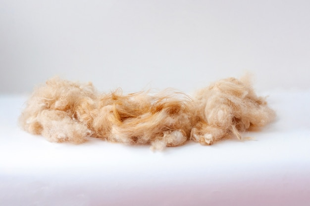 On the white surface lies a pile of shorn dog hair.