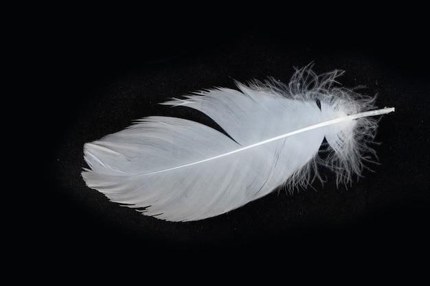 Перья белого лебедя, изолированные на черном фоне