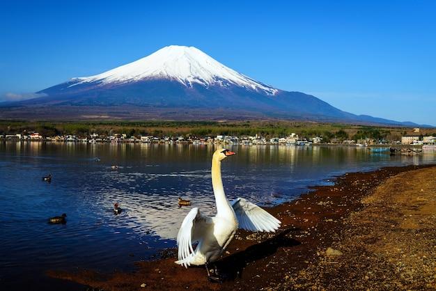 山中の白鳥の羽ばたき翼、五山の湖。富士、日本