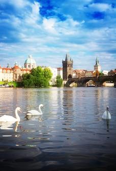 Белые лебеди на фоне карлова моста через реку влтава, прага, чехия тонированные