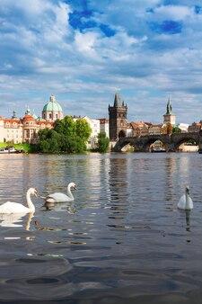 Белые лебеди на фоне карлова моста через реку влтава, прага, чехия
