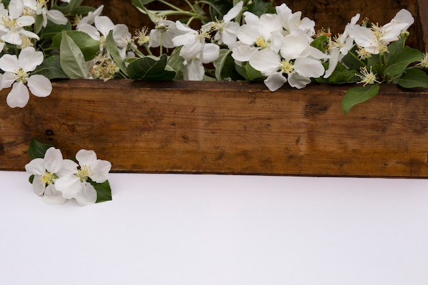 On an white table is an old wooden box with apple tree branches