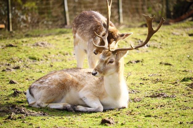 햇빛 아래 녹지로 둘러싸인 들판에 흰 꼬리 사슴