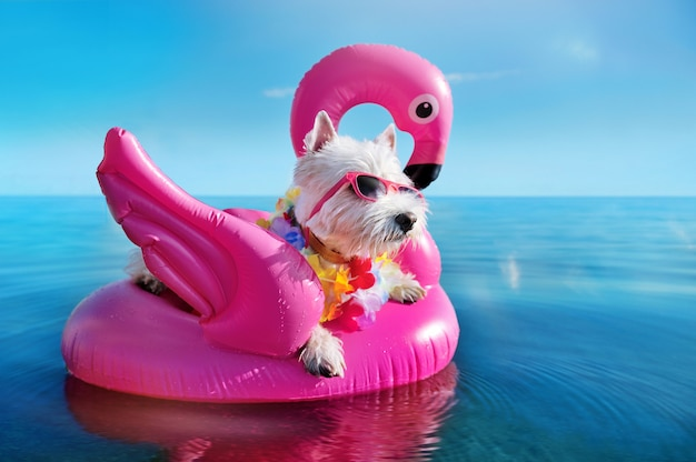 White terrier wearing tropical flower garland chilling on the pink rubber flamingo