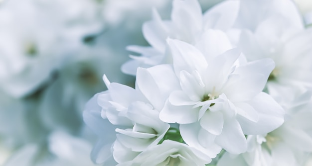 庭の花の背景に白いテリージャスミンの花