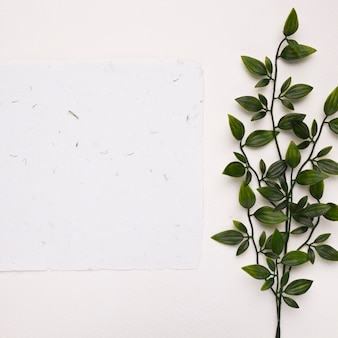 White textured paper near the artificial green twigs with leaves on white backdrop
