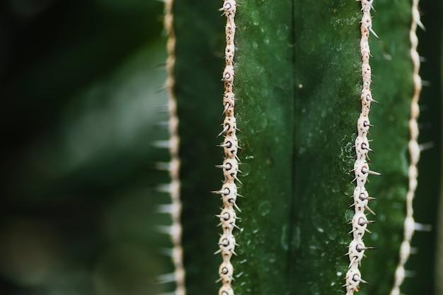 White thorns on cactus