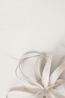 白い背景の上の白いハナアナナス植物