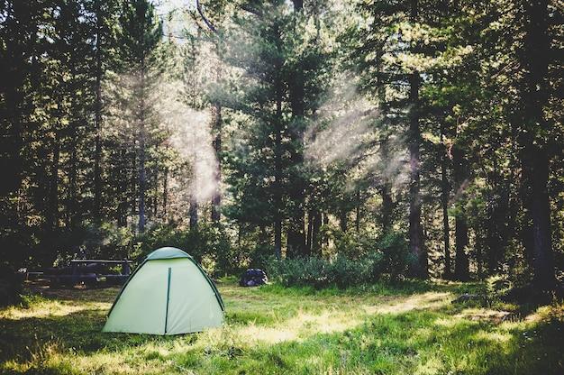 森の中の白い観光テント