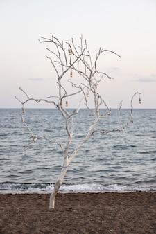 白い木と海の背景