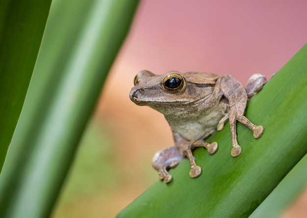 White tree frog in nature