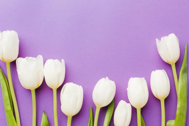 White tulip flowers arrangement flat lay