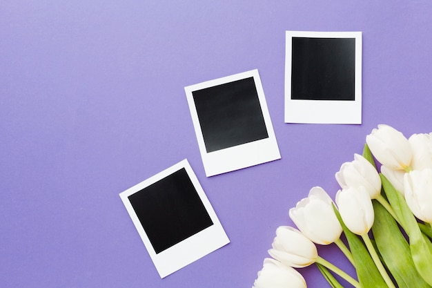 White tulip flowers with polaroid blank photos