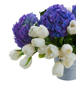 白いチューリップと青いオルテンシアの花が白いスペースに孤立してクローズアップ