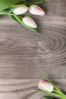 White tulips creating frame on wood