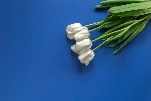 어두운 파란색 벽에 고립 된 흰색 튤립입니다. 봄 꽃 copyspace 및 텍스트 장소 flatlay. 녹색 식물과 봄 분위기 개념.