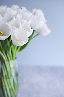 White tulips in transparent vase on color background. spring concept.