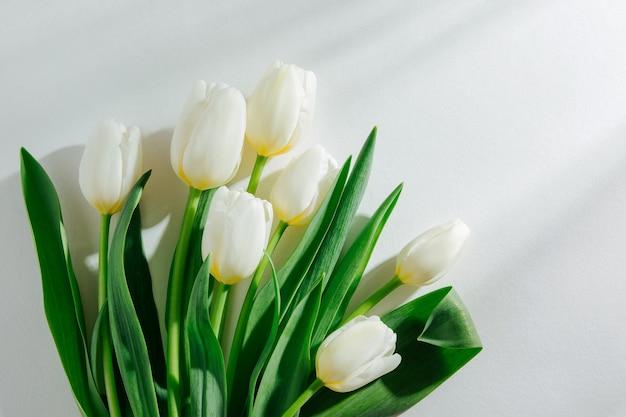 White tulips on white background with morning sunlight. stylish lifestyle compositions.