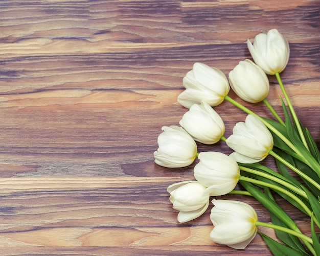 White tulips on wooden frame background