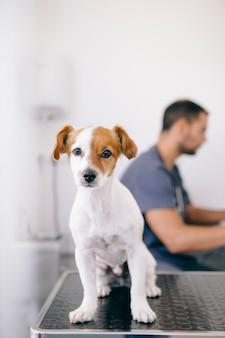 病気の子犬と白い獣医ホール