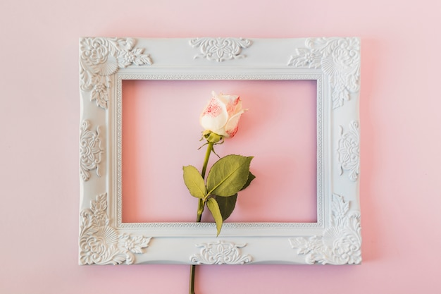 White vintage photo frame and fresh flower