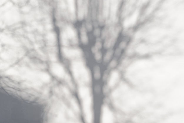 Белая стена и тень от дерева снаружи. текстура бетонной стены. копировать пространство